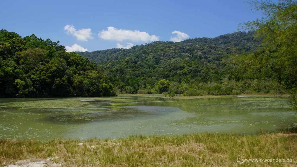 meromiktik lake taman negara pulau penang pinang