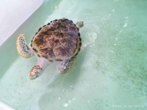 taman negara pulau pinang penang turtle conservation centre
