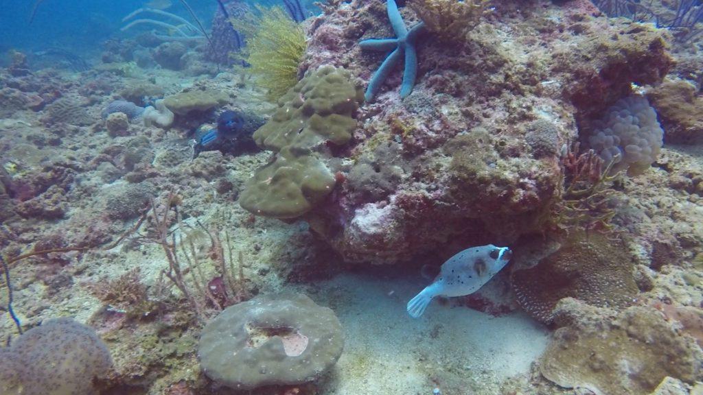 underwater world TARP