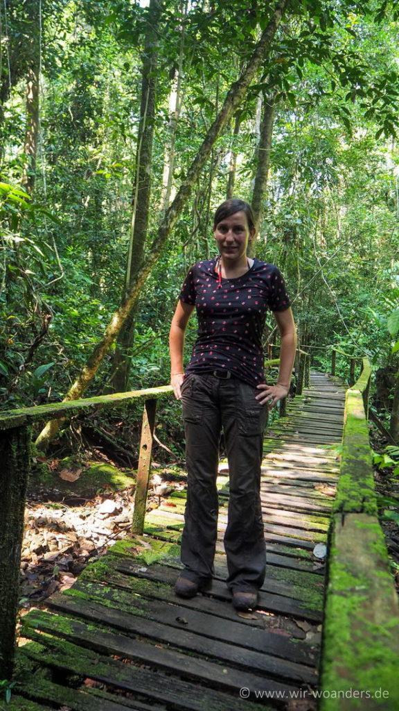 kubah_national_park_borneo_trail