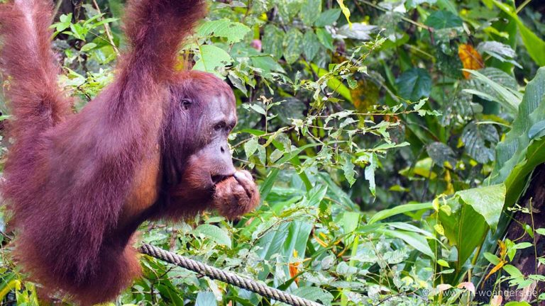 semenggoh_wildlife_center_borneo