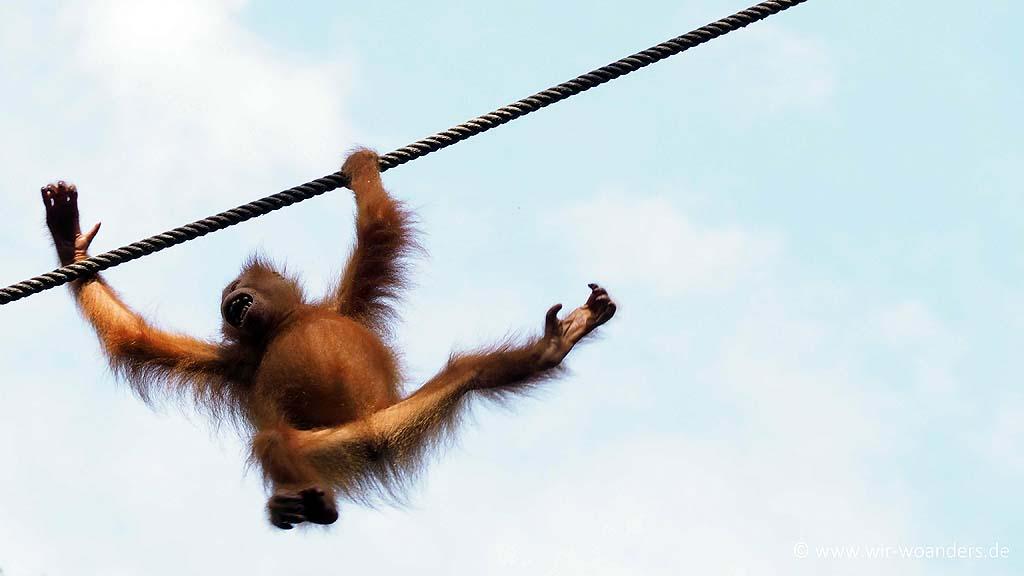 Semenggoh Wildlife Center Borneo