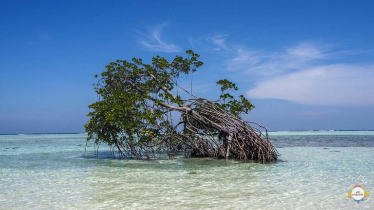 mangrove @ Karimunjawa