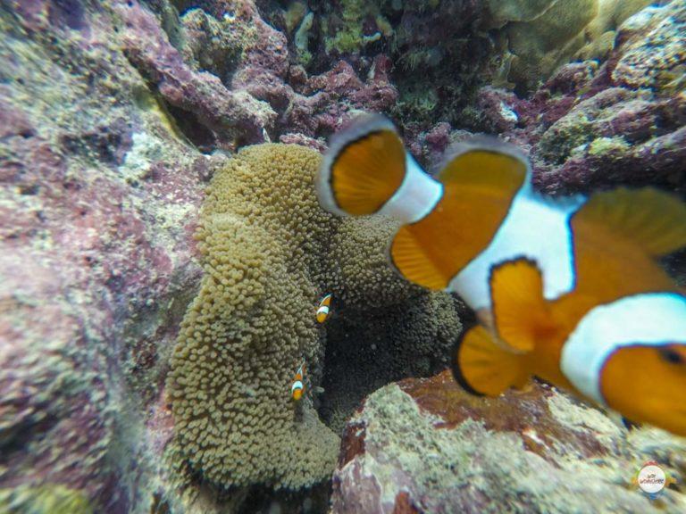 underwaterworld Karimunjawa