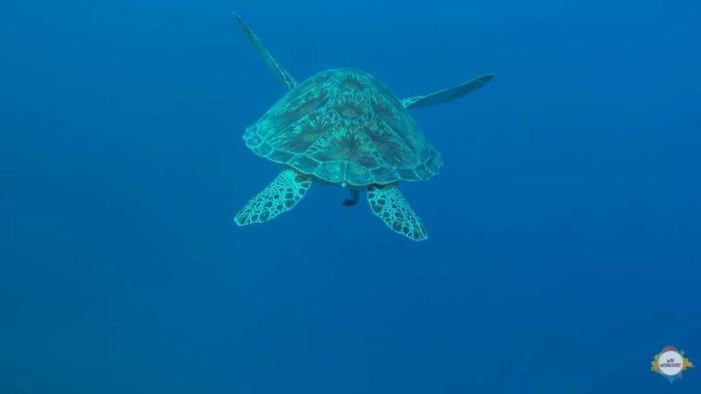 Turtle Mania in Karimunjawa