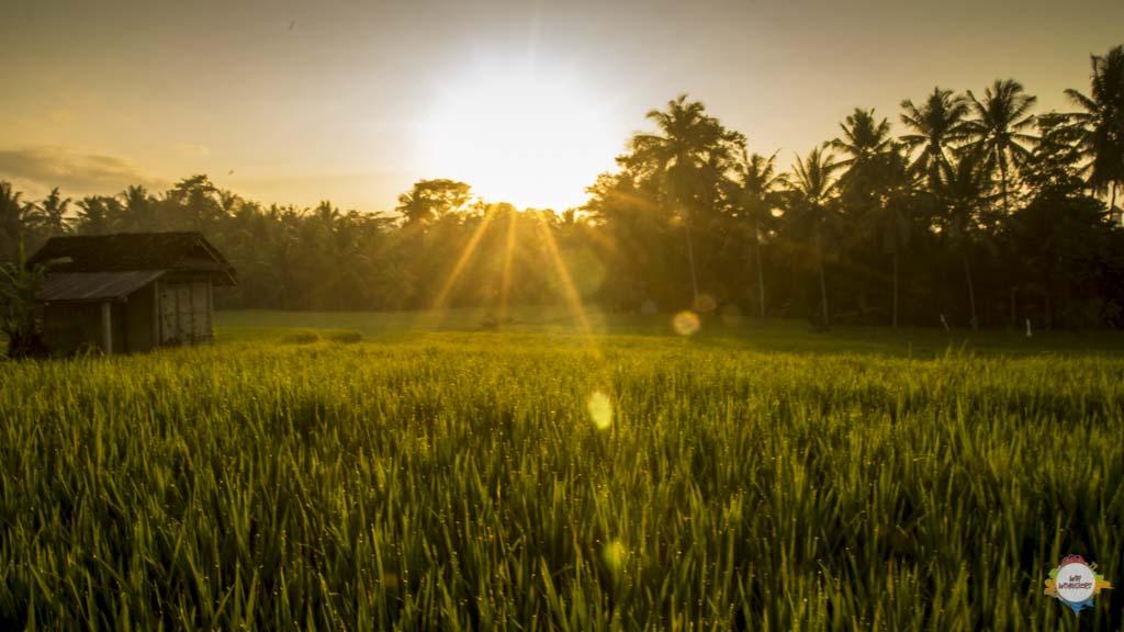 Ubud Manis Trail