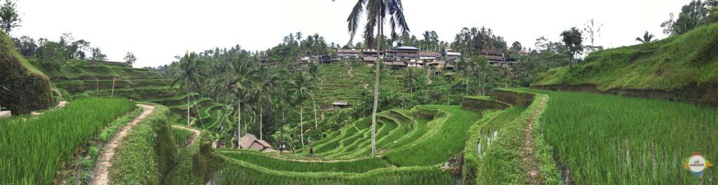 tegallalang_rice_paddies