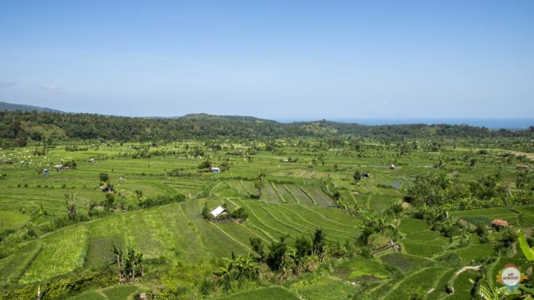 rice fields around Tirtagangga , Bali
