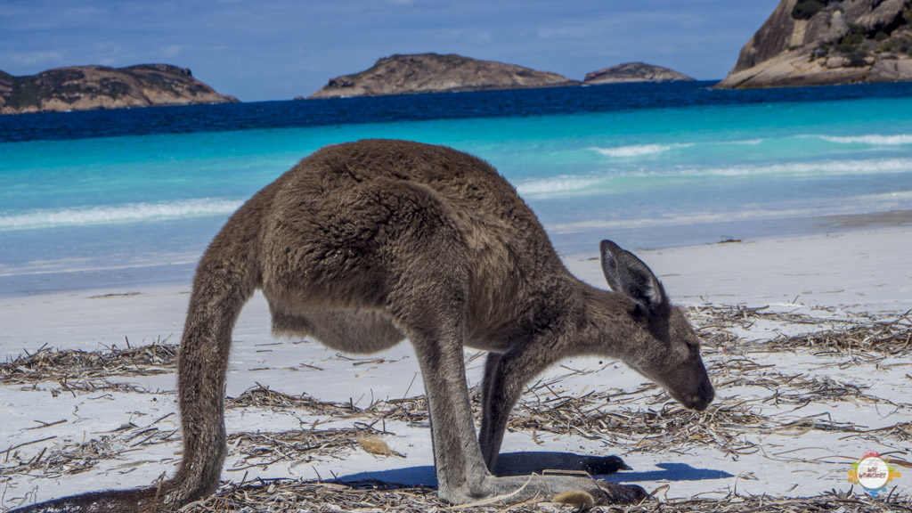 fazit_australien