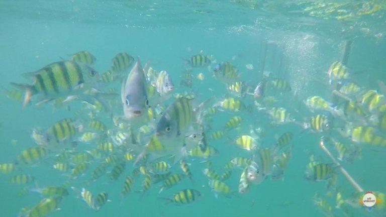 Aquarium dive @ Koh Lanta