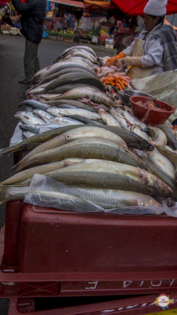 Mercado Rodriquez