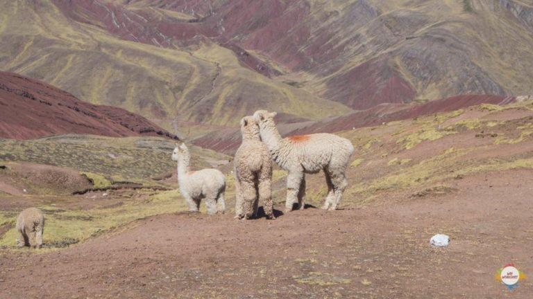 Cusco Palccoyo