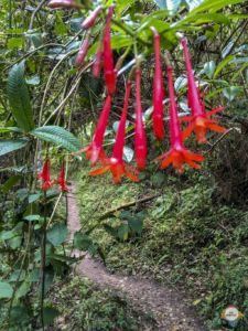 flowers Yumbilla